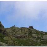 Ibex above Lac Blanc